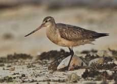 Green Island Birdlife
