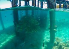 Green Island Marinelife
