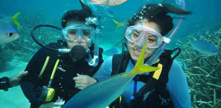 Introductory and Certified Diving